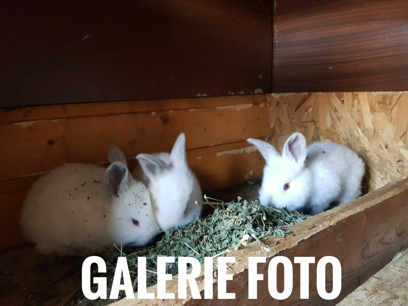 Vacante La Bunici - galerie foto